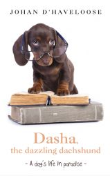 Dasha, the dazzling dachshund